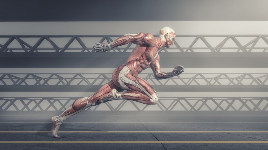 Male muscular system running on track . This is a 3d render illustration - Illustration