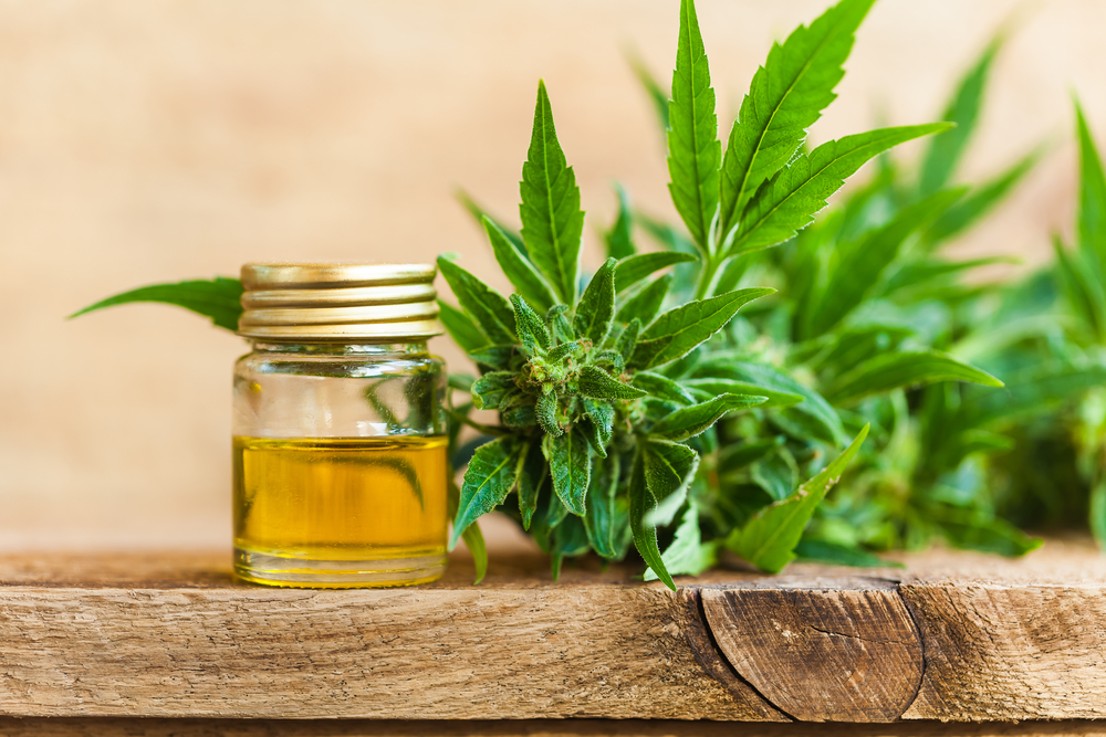 A close up shot of cannabis cbd oil hemp product. What are the cbd oil benefits?