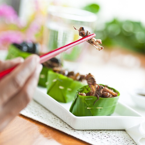 Some eating a bug delicacy on a platter using chopsticks.