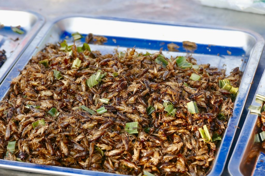 Edible bugs in a stainless steel tray. Did you know that eating bugs are good for you?