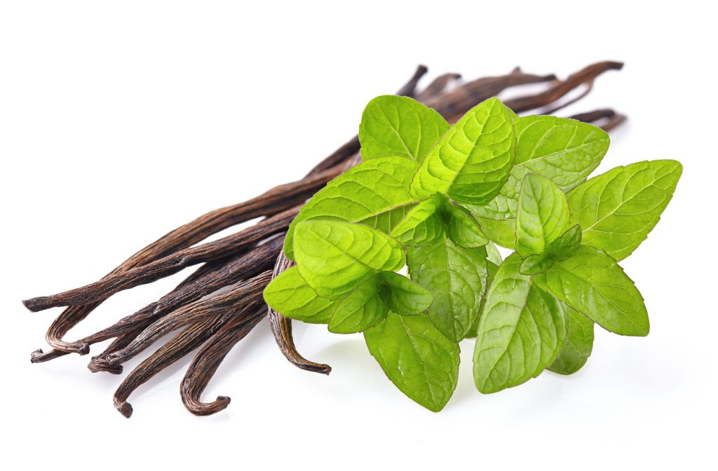 Vanilla sticks and mind leaves with white background.
