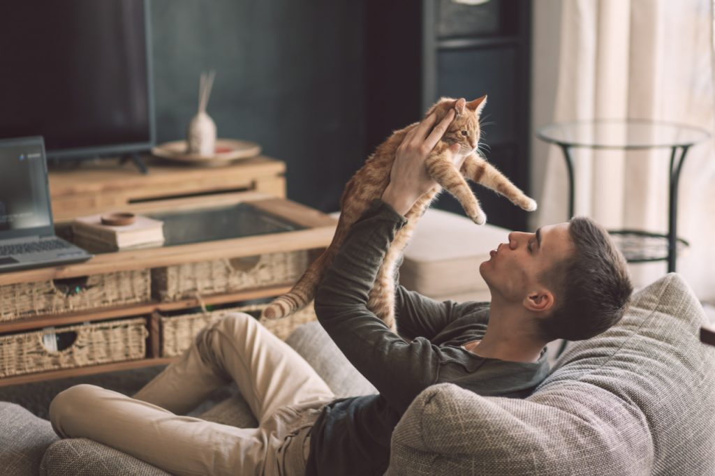 Owner playing with cat while relaxing on modern couch in living room interior