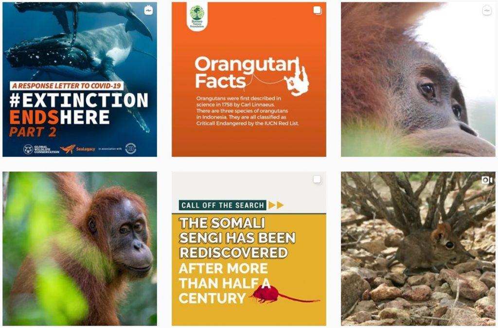 Global Wildlife Conservation Instagram page