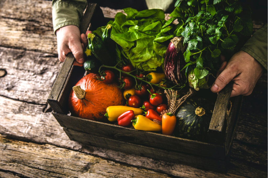 Organic vegetables on wood. Farmer holding harvested vegetables. Rustic setting. Organic vs non organic food, how do they compare?