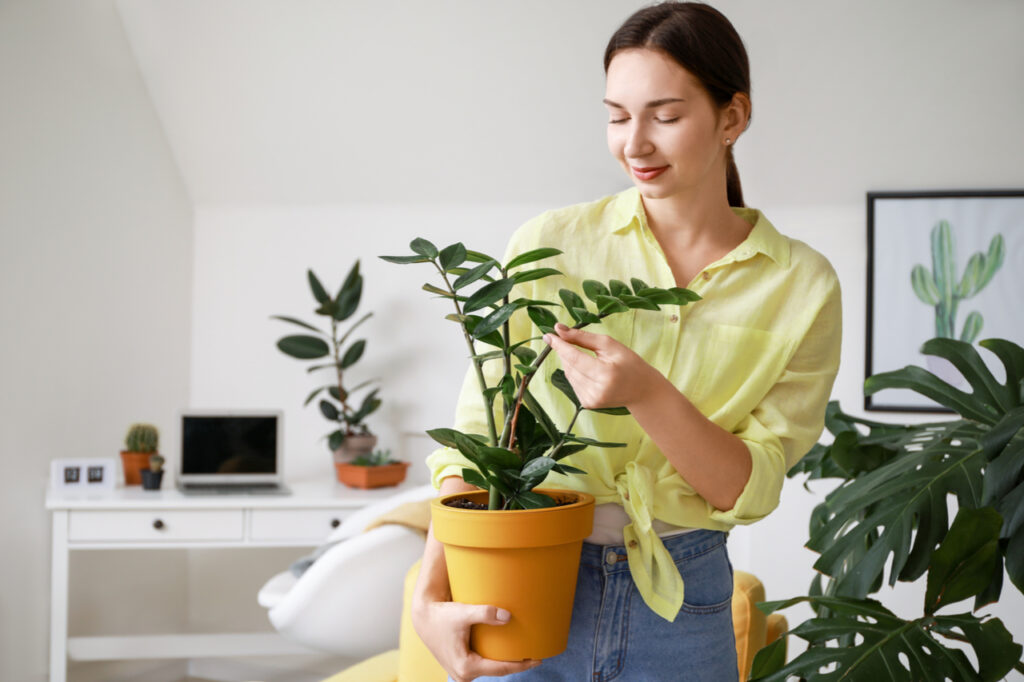 Young woman with beautiful houseplant in pot keeping a green home.