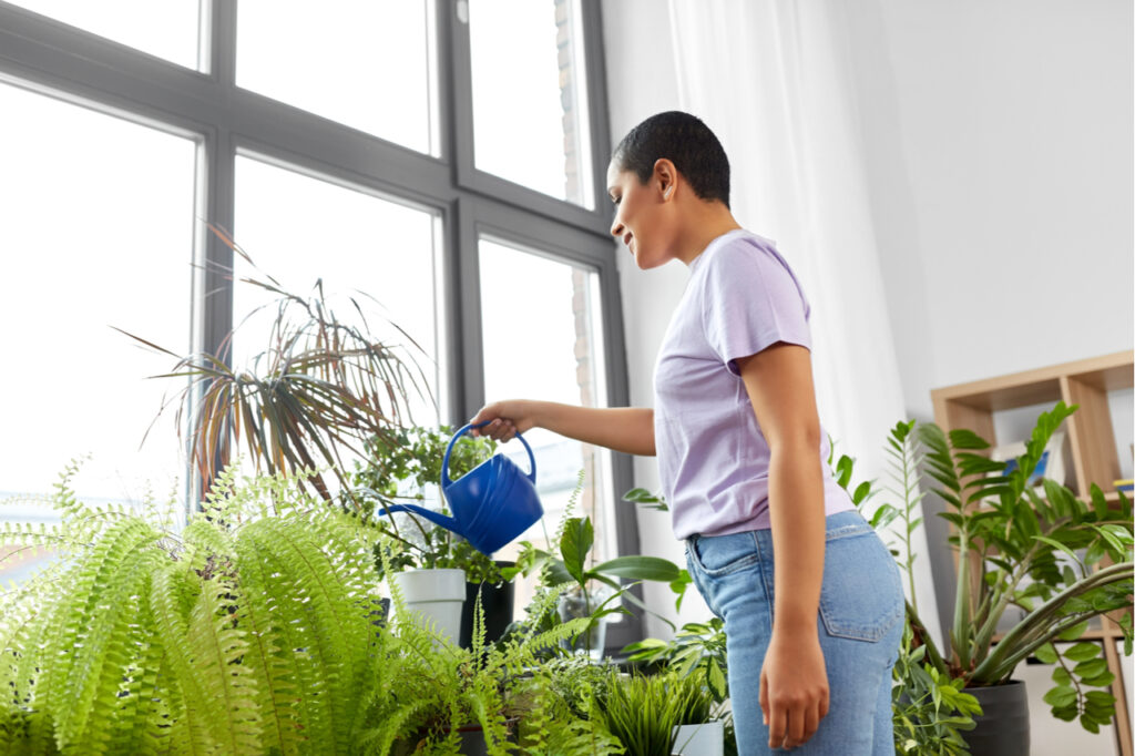African American woman watering houseplants at home.
