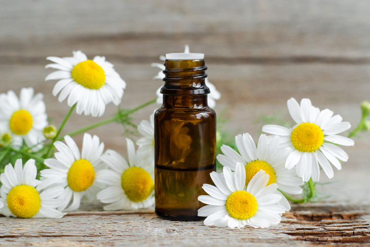 Small glass bottle with essential roman chamomile oil on the old wooden background.